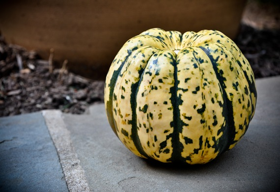 cooking-101-introduction-to-winter-squash3