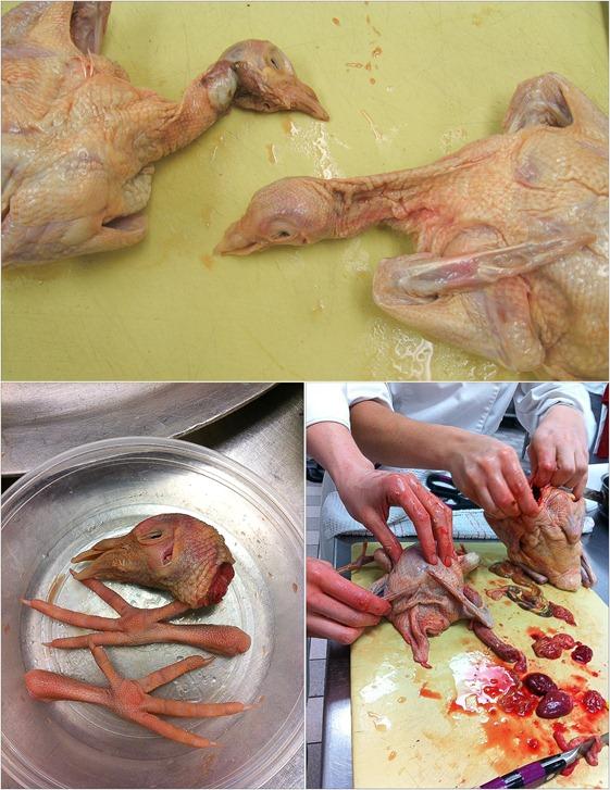 butchering pigeon