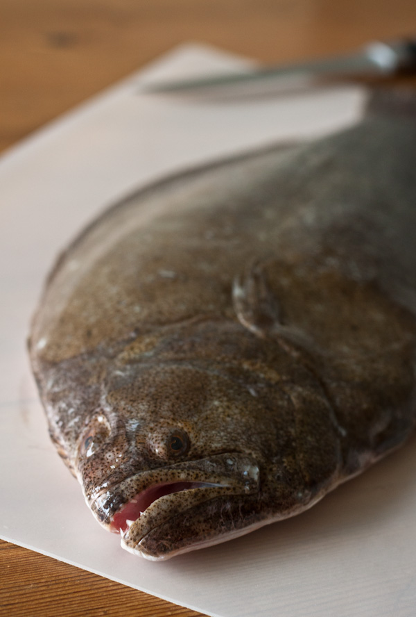 Whole Flounder