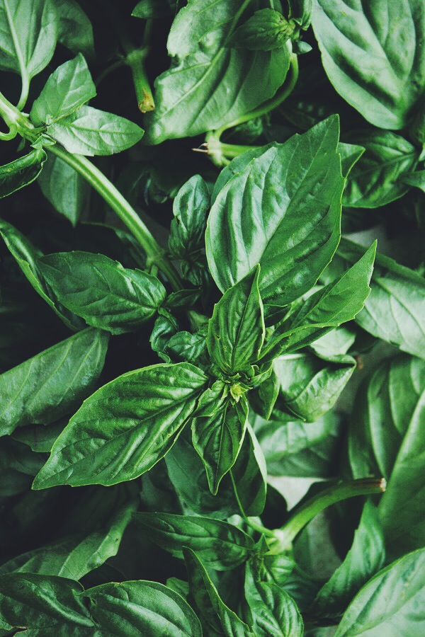 Basil Ice Cream | bloggingoverthyme.com
