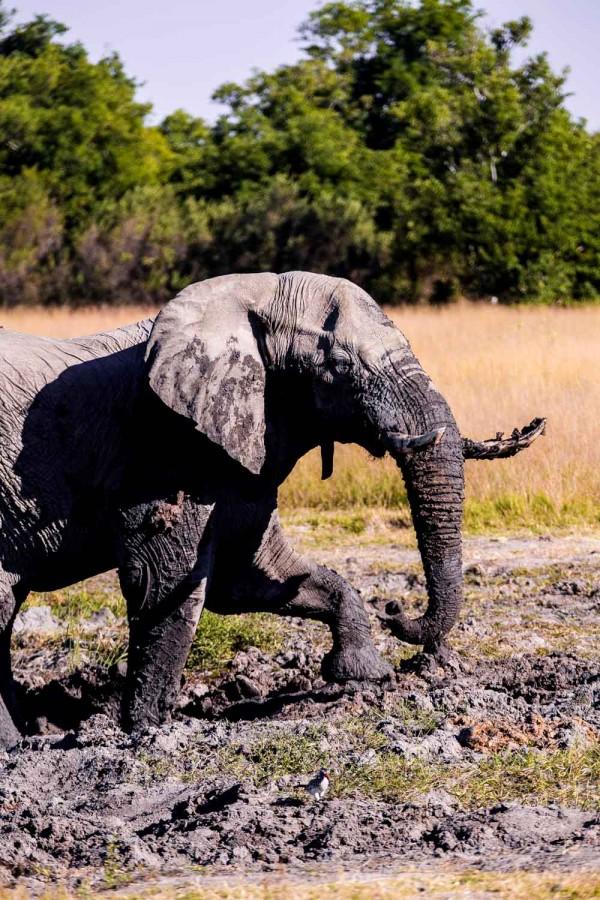 okavango-delta-safari-1-168