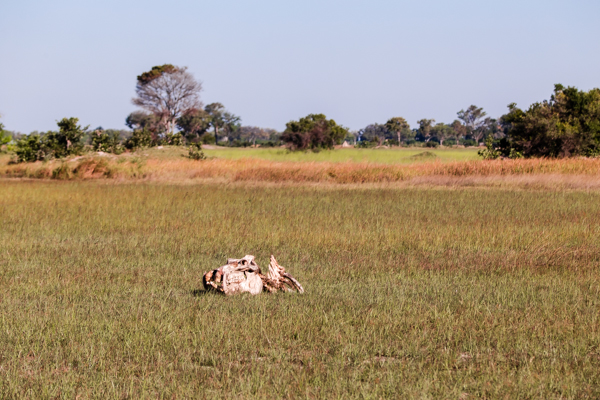 The Okavanga Delta, Bostwana