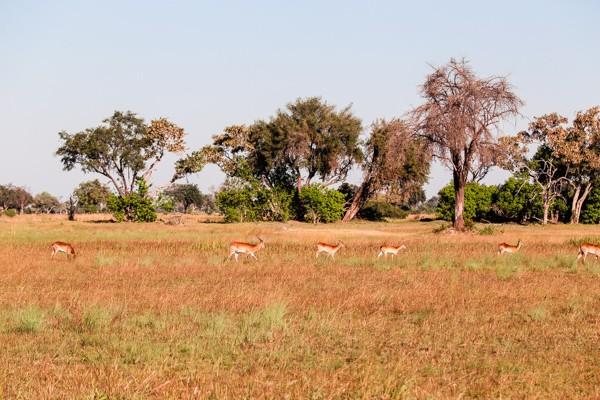 okavango-delta-safari-1-99