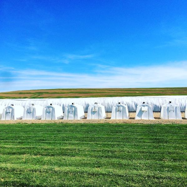 Ohio Dairy Farms