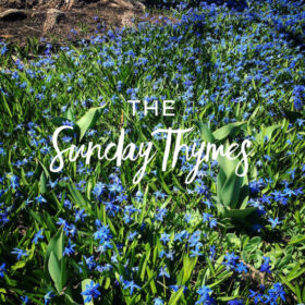 The Sunday T