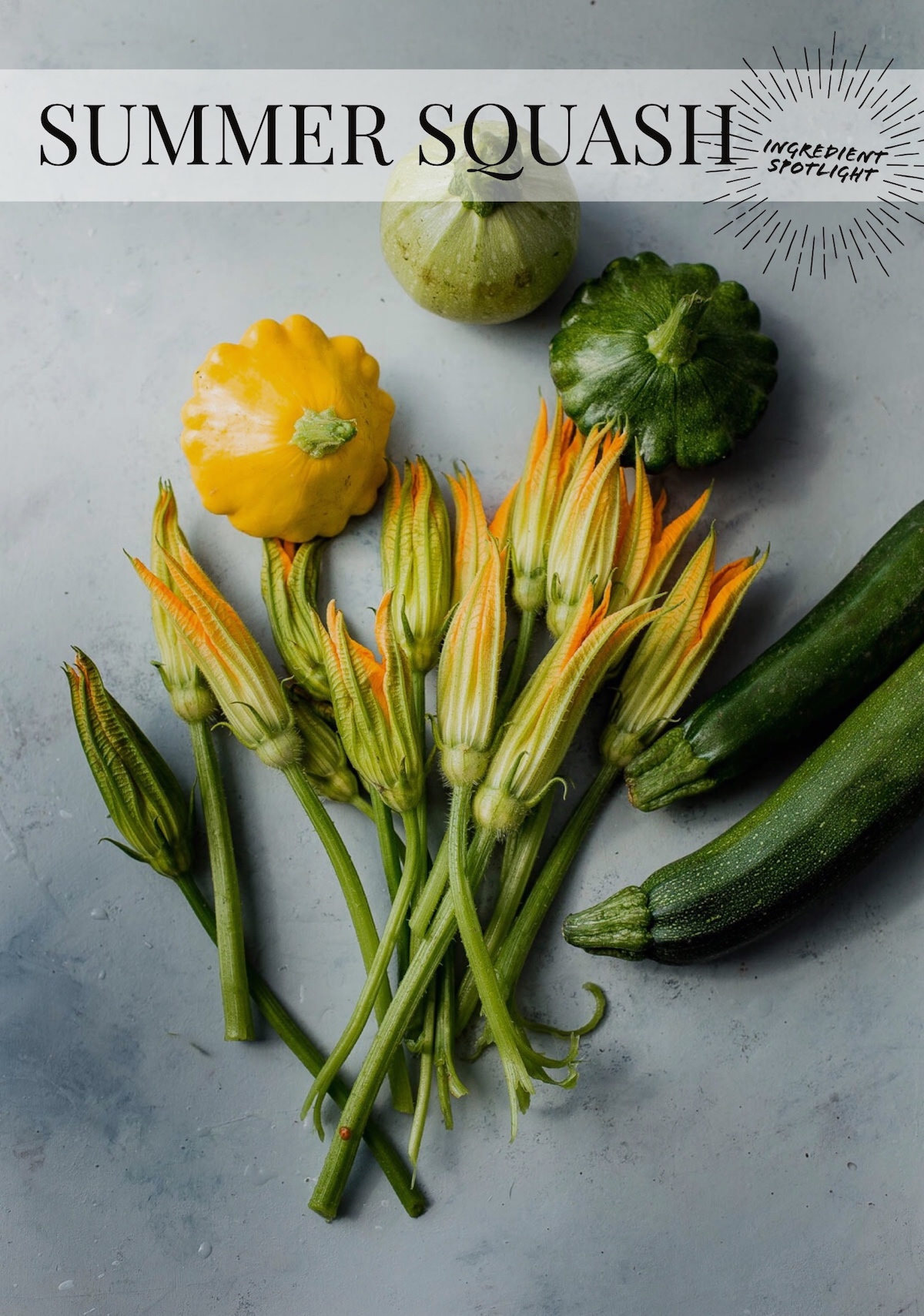 Ingredient Spotlight: Summer Squash. Everything you need to know about this favorite summer vegetable!