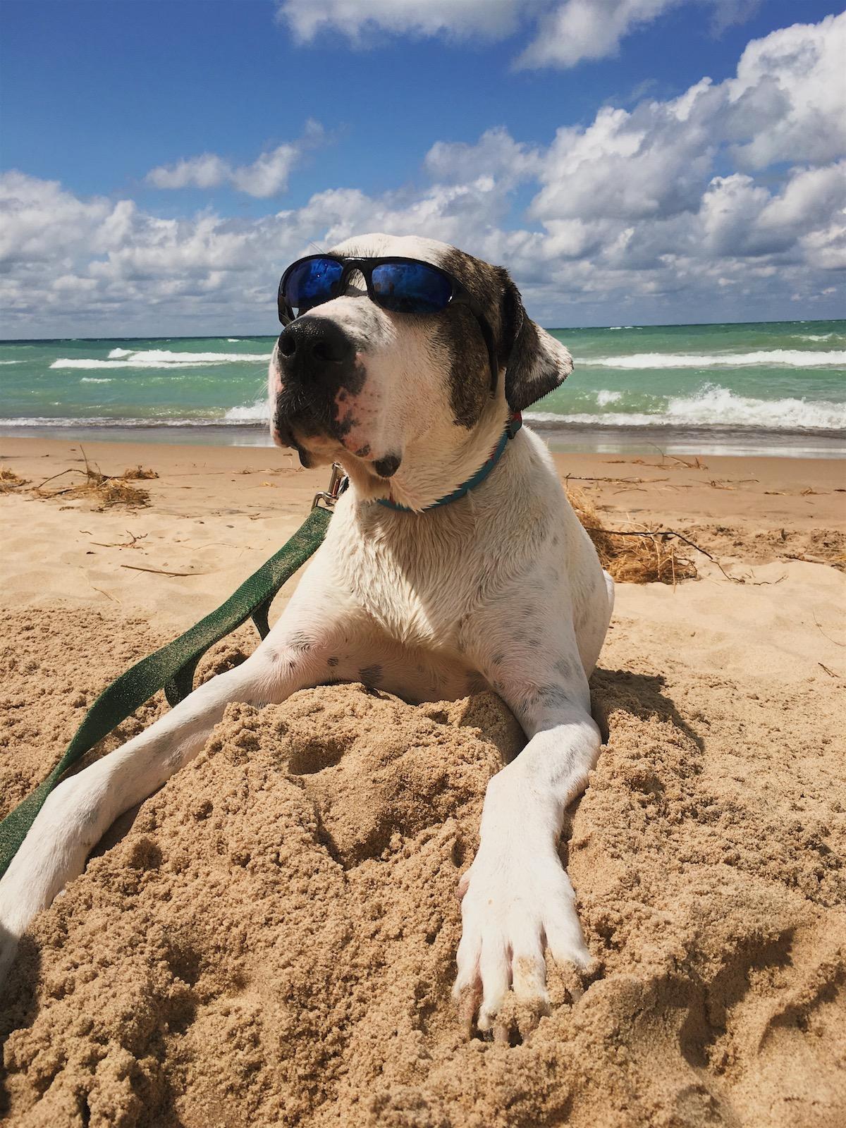Marley on the beach