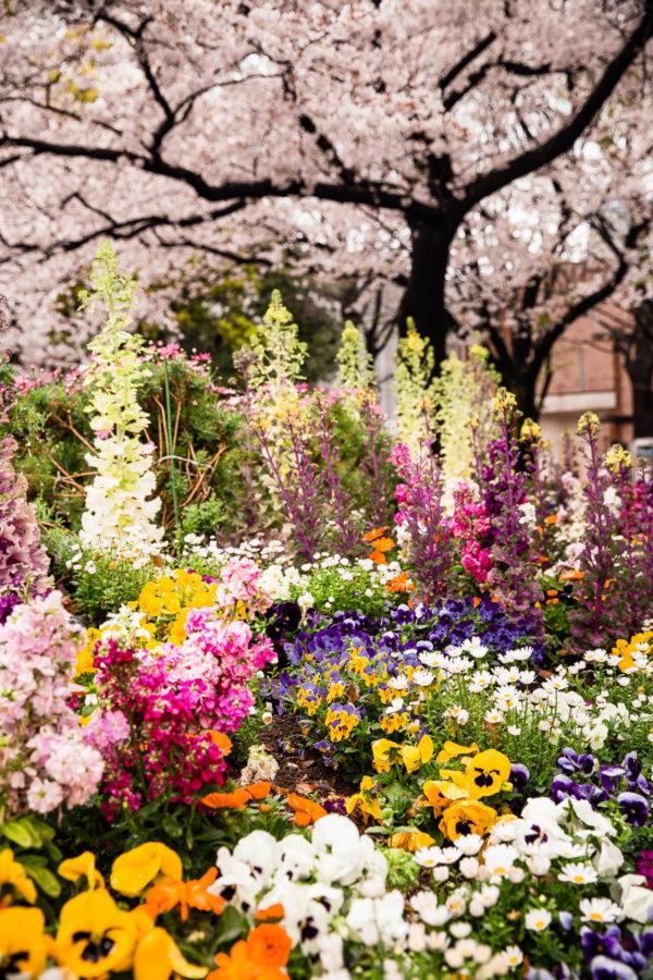 Tokyo Garden Flowers