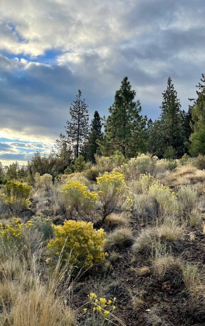 A Beautiful Plate Bend Oregon