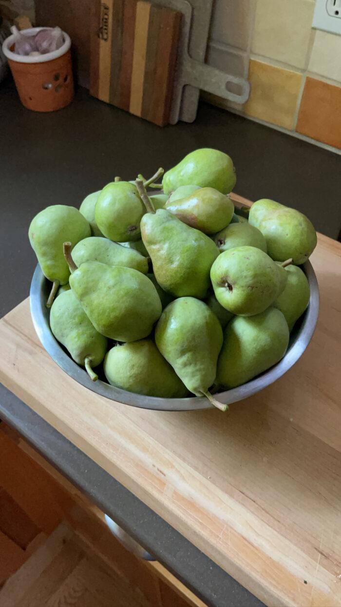 Bartlett Pears in Bowl